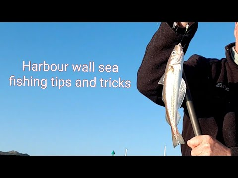 Harbour Wall Sea Fishing Tips And Tricks