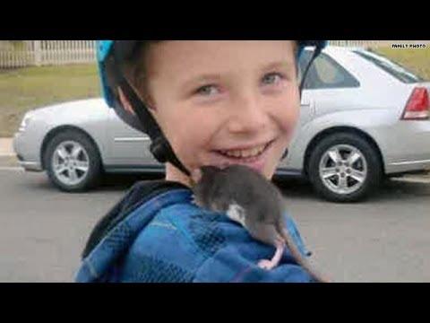 4 Ways to Prevent Rat Bite Fever - wikiHow