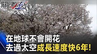 在地球不會開花 去過太空的櫻花種子成長速度比地球快6年!? 關鍵時刻 20170302-4 黃創夏 朱學恒