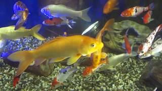 Красота,яркие рыбки