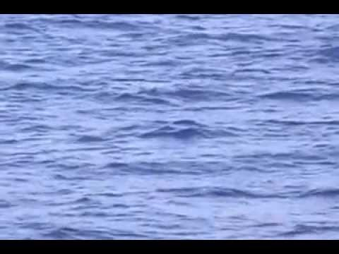 Whale in Hawaii Full Documentary