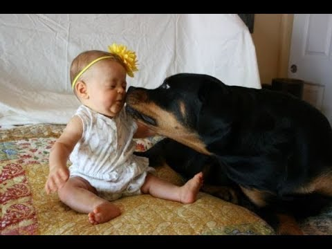 Thumbnail: Top 10 Best Of Cute RottWeiler And Babies Playing Videos Compilation - Funny Dog And Baby Videos