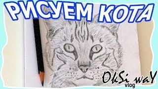 Как нарисовать кошку - рисуем кошку карандашом легко и поэтапно