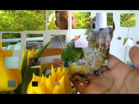papegaai kopen Stop Bijten
