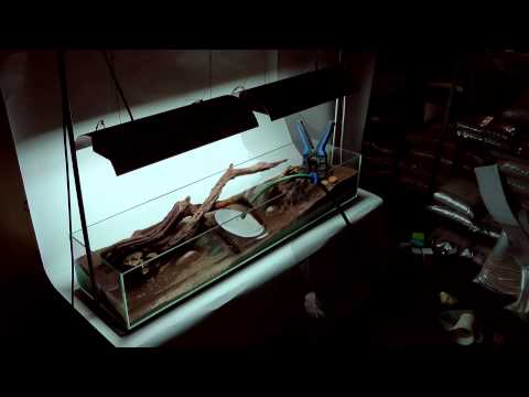 'Tributary' Aquascape by James Findley - The Making Of