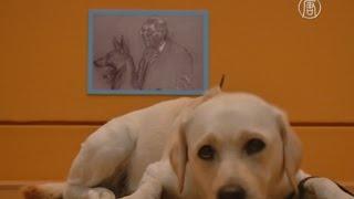 Собаки осматривют музей в Берлине  (новости)