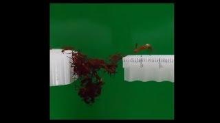 Hormigas Usan Sus Cuerpos Para Crear Un Puente
