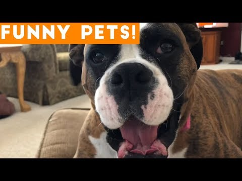 Funniest Pets & Animals of the Week Compilation April 2018 | Hilarious Try Not to Laugh Animals Fail