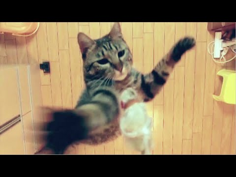 Cat Jumps 1.96M High Explained - You Have Been Warned