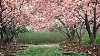 teresa - ivan della mea