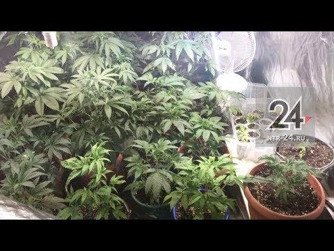 Нижнекамск марихуана ноггано не кури марихуану
