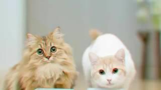 Прикольные фото кошек ^слайд-шоу^ || Cats World