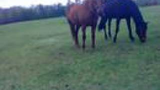 Horses at flatwood-I will always return