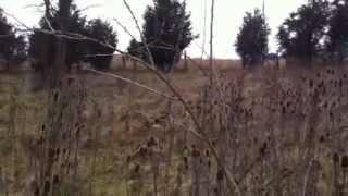 Henry county rabbit hunt