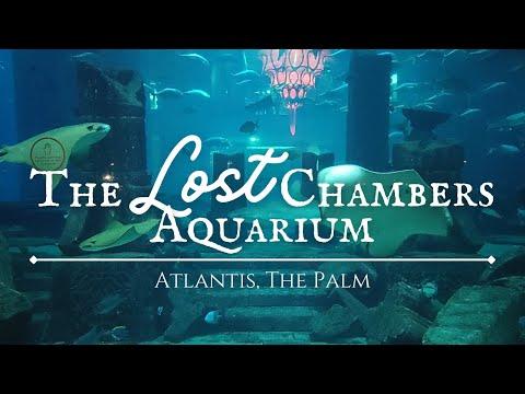 The Lost Chambers Aquarium in Atlantis, The Palm, Dubai | Relaxing Music
