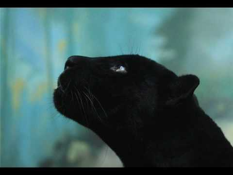 Wonderful creatures - Animals - YouTube