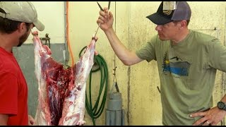 Skinning & Weighing a Wild Pig w/Steven Rinella