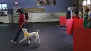 Athletic Dog Training