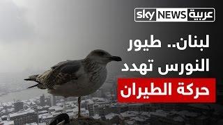 لبنان.. إغلاق مطمر نفايات يهدد أمن الطيران