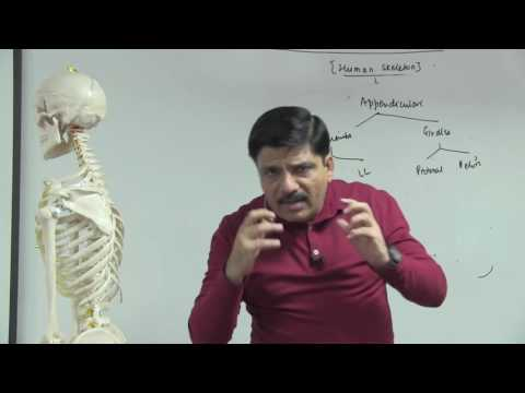 Bones in Appendicular Skeleton - Locomotion & Movement - Dr. NK Sharma | NEET AIIMS | Video Lectures