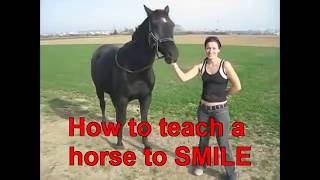 Download Video Women VS Horses - What Is The Fascination? MP3 3GP MP4