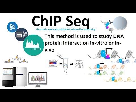 Chip seq (chromatin
