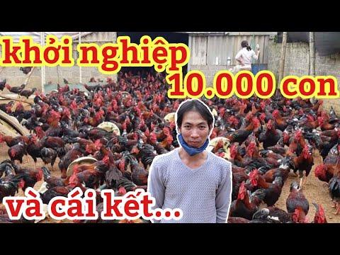 TRANG TRẠI GÀ MÍA LỚN NHẤT HOÀ BÌNH. khởi nghiệp với 1 VẠN gà