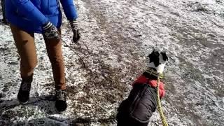 Корм для собак Практик. Команда Вольт, флэт или прыжок от стены