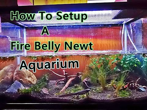 How To Make A Nice Looking Fire Belly Newt Aquarium (Full HD)