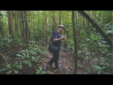 exploring-the-wildlife-in-madagascar---rough-guide