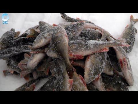 приготовление прикормки от рыболова сибирский странник некоторым признакам