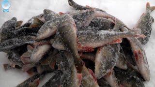 Программа ''Рыбалка в Сибири'': 01 апреля 2016