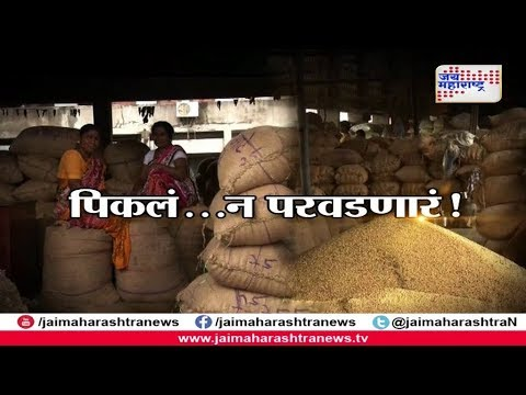 Soyabean crop price fall down   पिकलं... न परवडणारं !