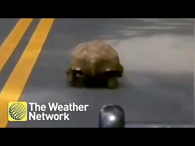 Cop heckles tortoise and may actually be in the right