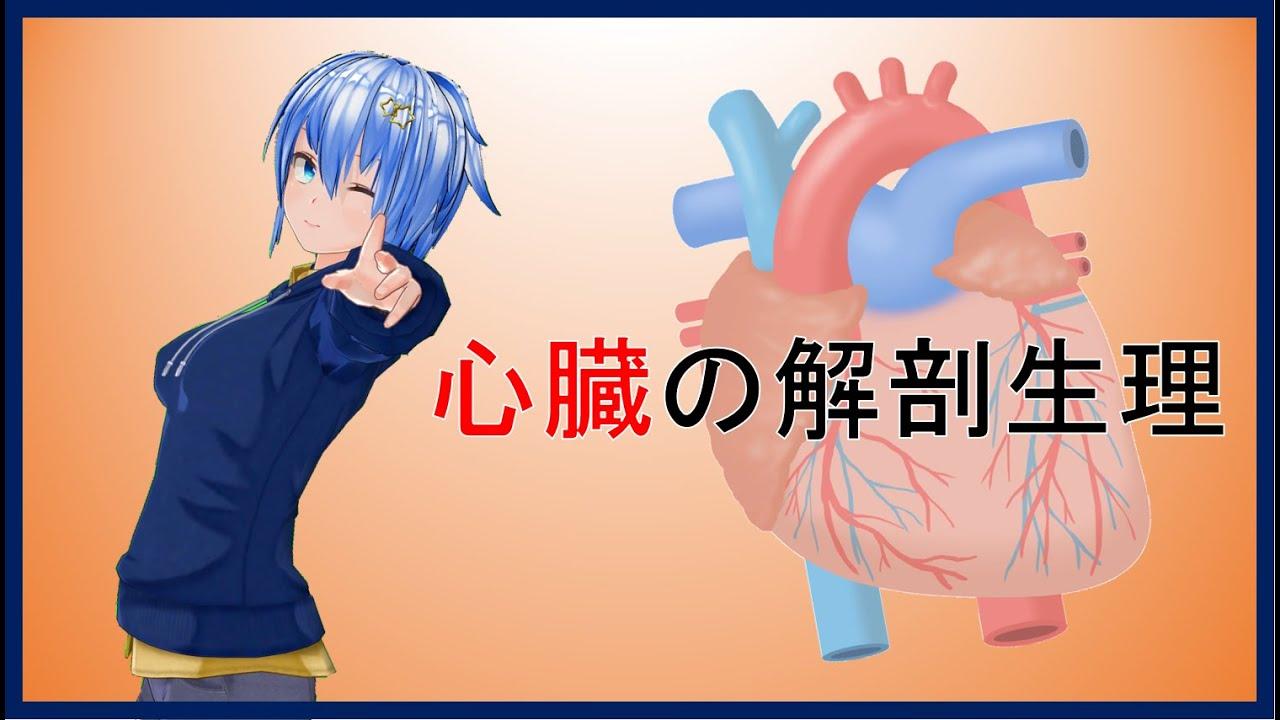 【臨床工学技士】心臓の解剖生理学【国家試験】