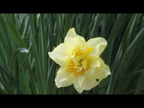 Calhoun County Spring