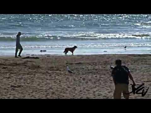 Beach video - California Travel - YouTube