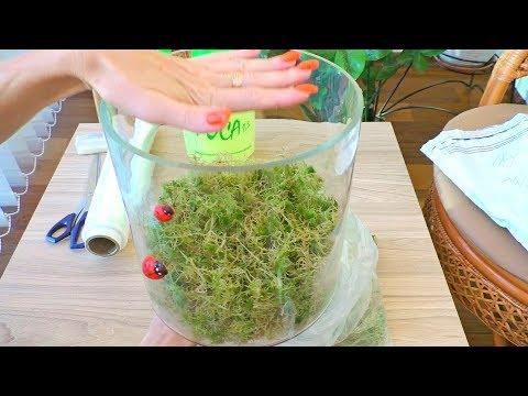 Как хранить мох из леса в домашних условиях