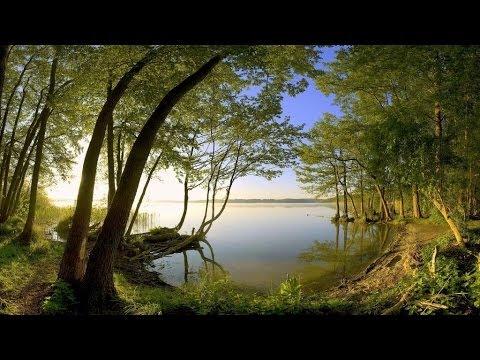 Khi rừng thu thay lá - Linh Vương