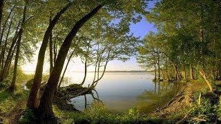 Khi rừng thu thay lá - Linh Vương thumbnail