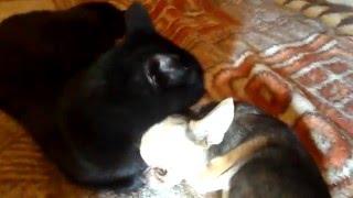 Кто сказал, что кошки не любят собак?