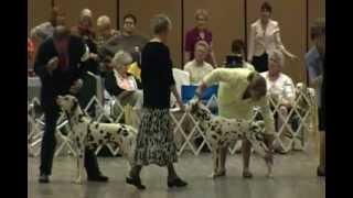 Dalmatian Club Of America- Best Of Breed 2012