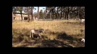 The Horses - Daryl Braithwaite