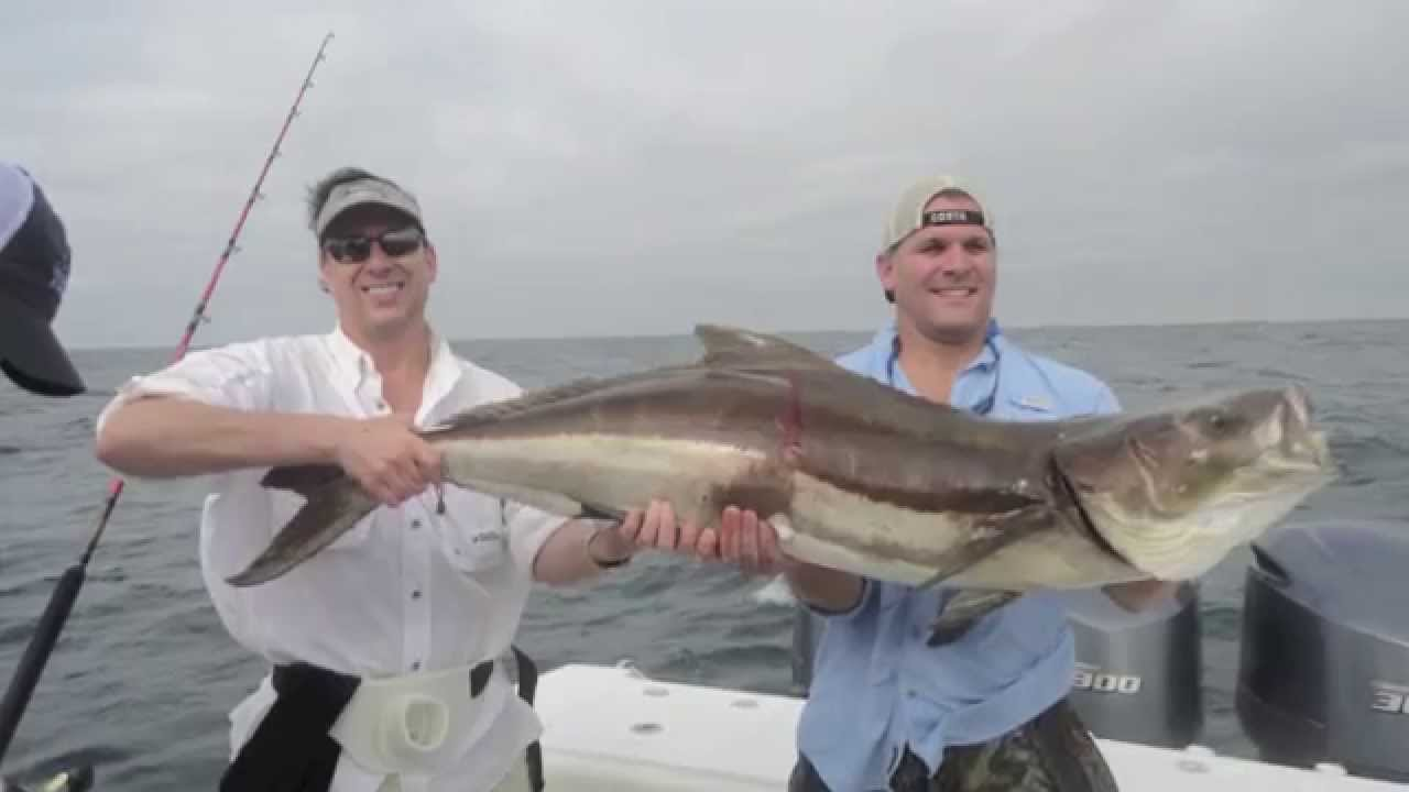 Crazy cobia action cocodrie louisiana youtube for La fishing license
