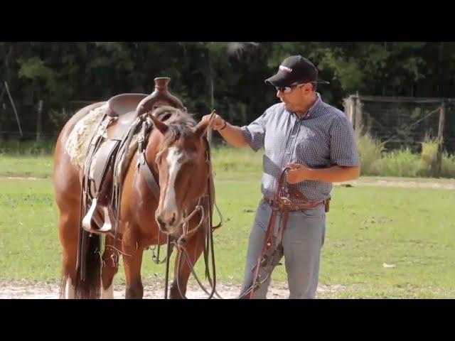 O Quarto de Milha no Brasil, dicas de manejo, equitação, estação de monta e nutrição animal