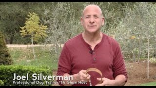 The Alternative Training Collar | Product Of Professional Dog Trainer Joel Silverman