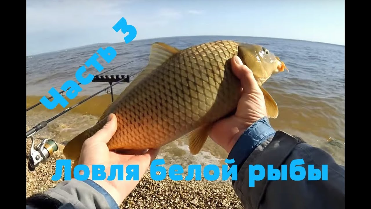 рыбалка 2014 видео летняя рыбалка
