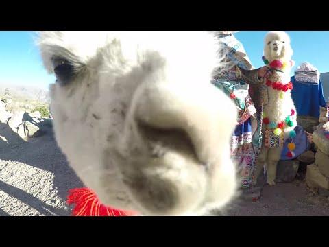 Arequipa & Colca Canyon, Peru | Llamas!!!