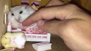 This Happy Hamster won't sleep until she has her snack!
