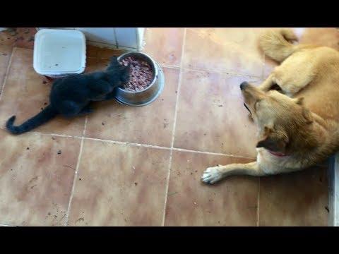 İçinde köpek genleri bulunan kedimiz Duman